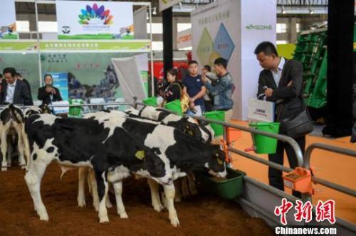 乳业集中度提高 蒙牛营收比伊利少百亿