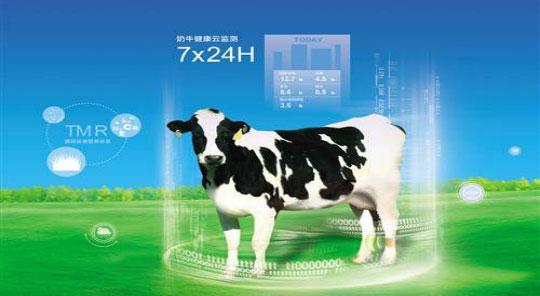 高山云牧场,更好的牛奶!
